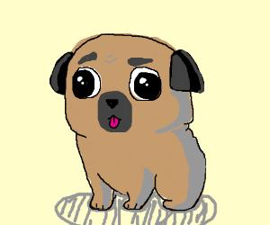Cute pug puppie