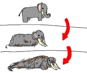 Elephant turns into a walrus