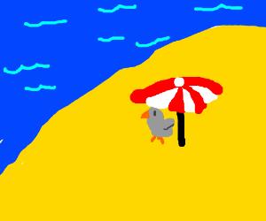 grey bird chick at the beach