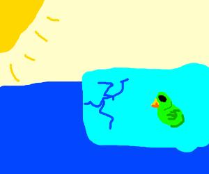 A bird on an small iceberg under the sun