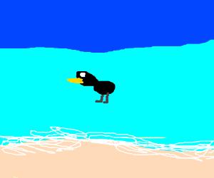 bird in the ocean?