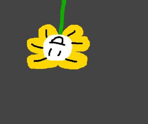 A flower upside down