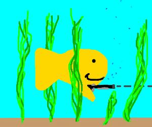 goldfish got a gun (everybody run)