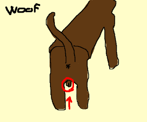 Dognut