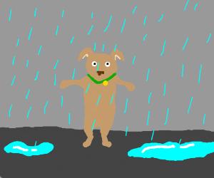 Dog in the rain wants a hug