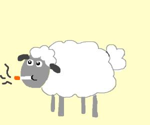 smoking sheep