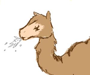 Spitting camel - Drawception