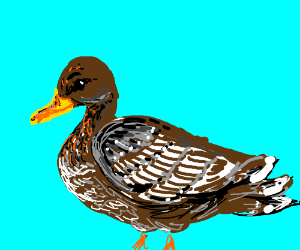 A duck with white brown fur