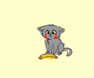 cat crying blood next to a banana