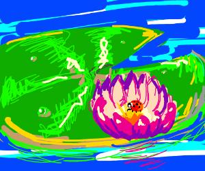 Ladybug on a lily pad
