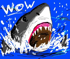 shark breaches the surface