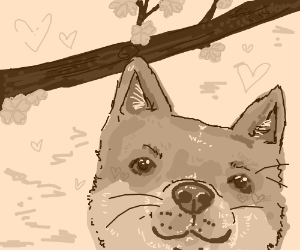 so doge, so wow, so... cherryflowersinspring