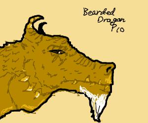 Bearded Dragon PIO