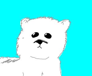 Poalr Bear