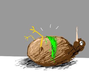 dead kiwi bird is actual kiwi