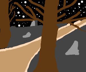 A path surrounded by trees at night