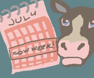 Cow Week!