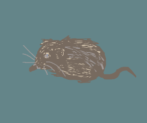 long snouted mouse