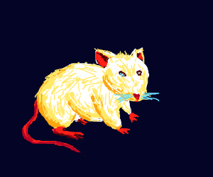 a mouse (animal)