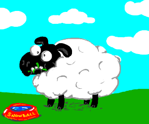 Snowball the Derpy Sheep