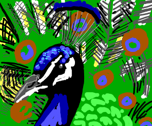 realistic peacock
