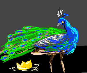 Peacock finds a crown