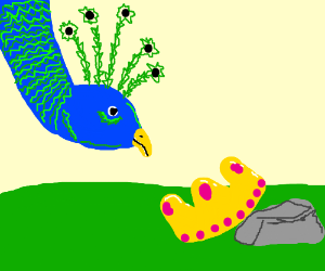 Peacock drops its crown
