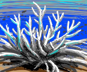 Frozen Coral