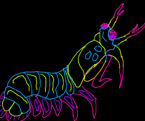 The glorious pistol shrimp