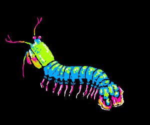Psychedelic Mantis Shrimp