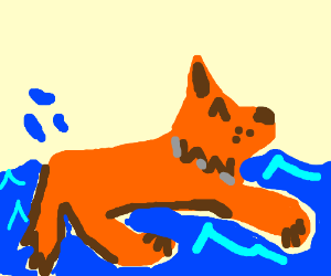 Fox goes for a swim