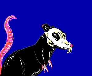 black rat withy skull on outside