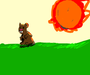 Groundhog going to get hit with a asteroid