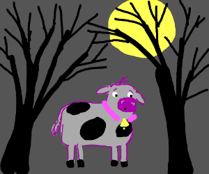 Confused cow in forest at night
