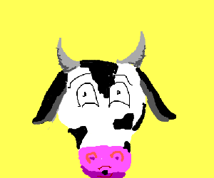 cow has seen some stuff