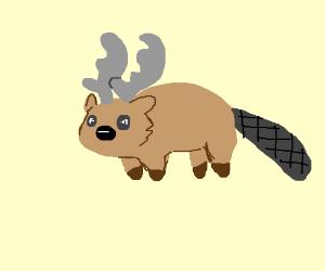 beaver + moose