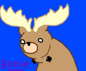 Bear/Moose fusion.
