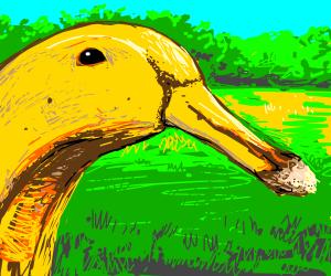 Banana Duck Drawception