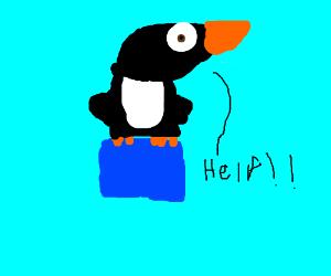 Penguin stuck on an ice cube