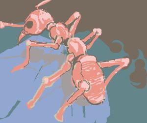 ANT (PIO)