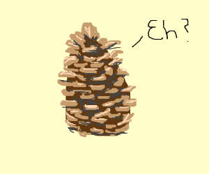 a canadian pinecone