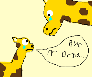 little giraffe says bye to mama giraffe