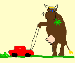 Cow eating some weed whiel mowing the lawn