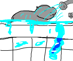 Hippo having a shower