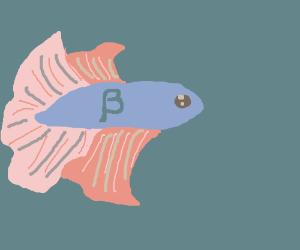 Betta fish for Betta fish game