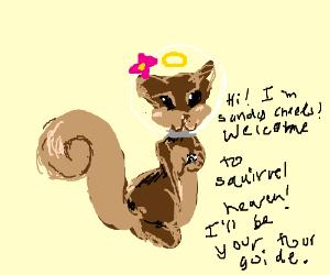 Squirrel heaven