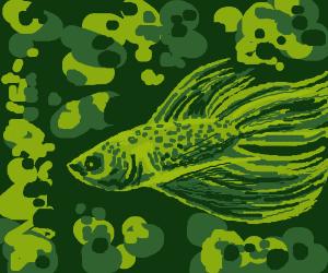 camo beta fish