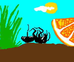 an ant dying between grass and a piece of oran