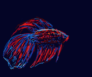 Blue and red betta fish
