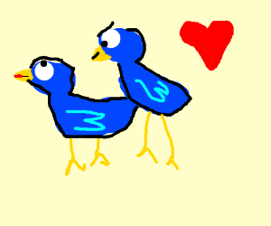 two blue birds making love